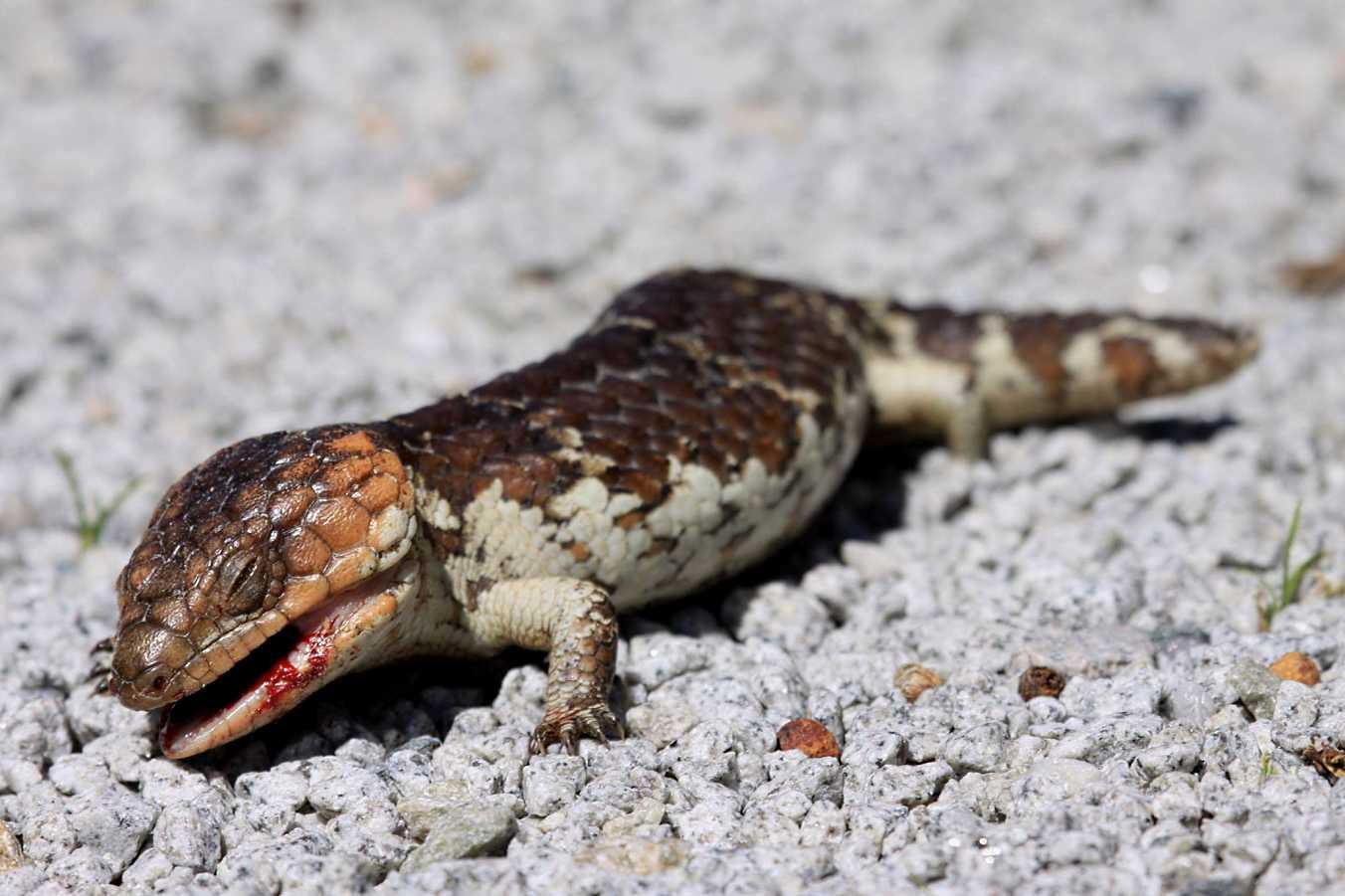 armadale reptile u0026 wildlife centre western australia